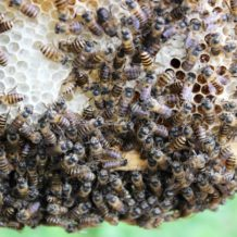 Life is Healthy and Sweet at Honey House Honey Bee Farm
